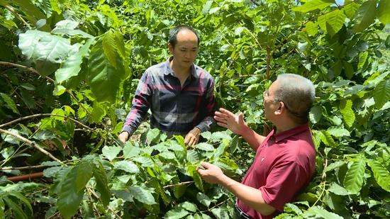 """保山隆阳:重塑咖啡产业 打造世界一流""""绿色食品牌"""""""