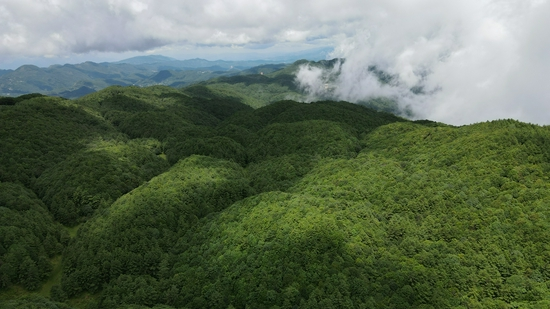 [生物多样性之美]善洲林场:万物和谐的美丽世界