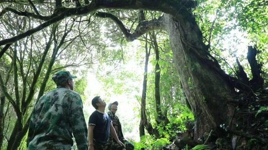 施甸善洲林场:山清水秀生物多样