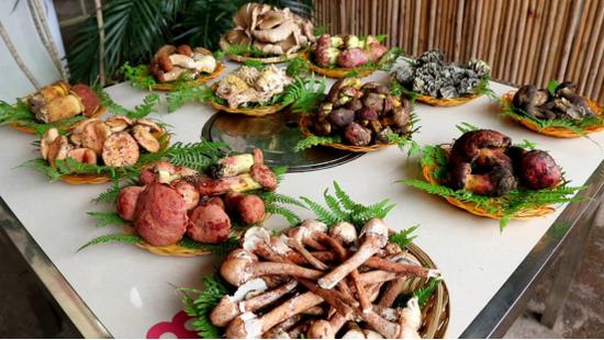 """保山施甸:12种野生菌的花式吃法 寓意""""十二月月月吉祥"""""""