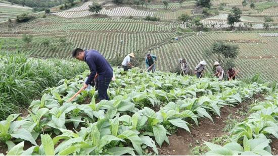 施甸万兴乡:党建引领产业发展 促农增收