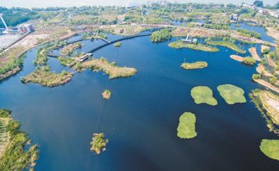如今的梅子社区,部分区域已经成为斗南湿地公园。肖建华摄