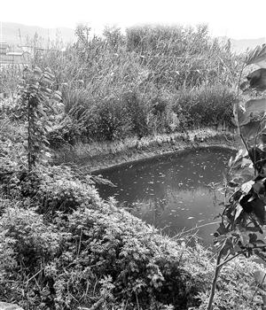 大理11岁男孩厂区水塘溺亡 涉案公司赔偿12.9万元