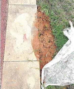 草坪上出现很多蚁穴