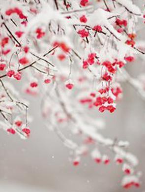 昆明局部地区将出现雨夹雪或小雪天气