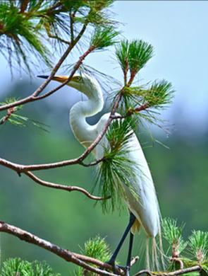 澄江绿水青山 飞鸟蹁跹百鸟长鸣
