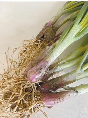 昆明多个农贸市场售卖掉色小葱 官方回应尚未接到投诉