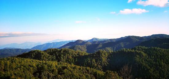 绿色林海 郁云江 摄