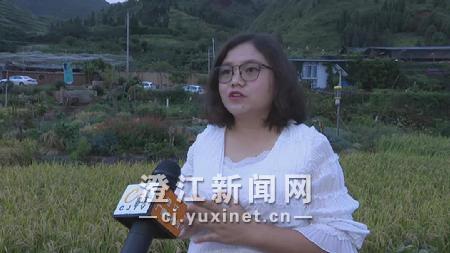 晶喜庄园负责人 杨喜