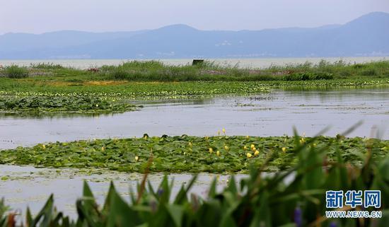 滇池生态湿地。