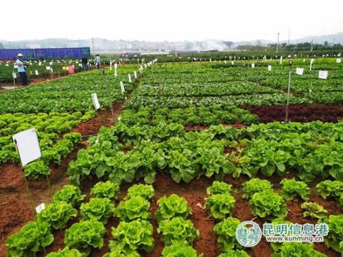 展示会现场的蔬菜基地。记者江枫 摄