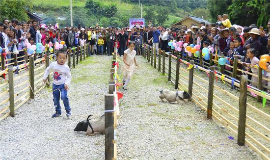 """兰山火腿松露文化节上的""""小猪赛跑"""""""