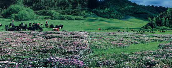 草场鲜花开满地