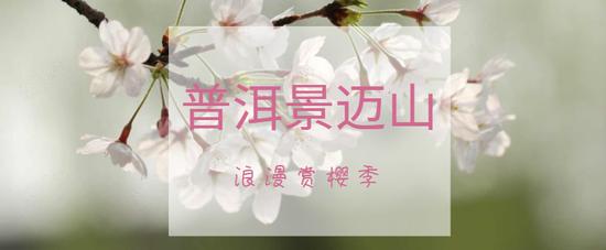 景迈山赏樱攻略丨在寒冷冬日探寻诗意春天