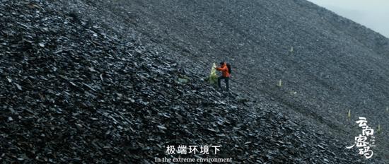 植物学家徐波在流石滩寻找塔黄