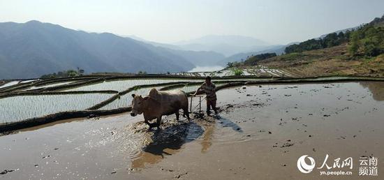 澜沧江畔拉祜山乡群众春耕忙。摄影:谭春
