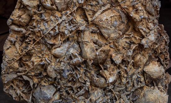 碧寨古生物化石
