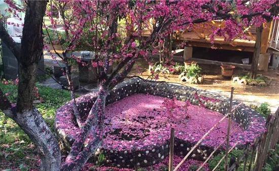 春城午后降疾雨 却是繁花落满地