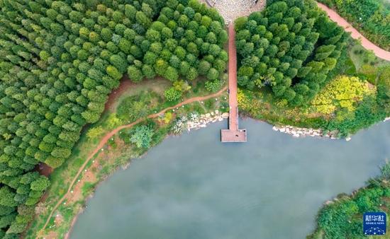 9月4日拍摄的海洪湿地公园(无人机照片)。