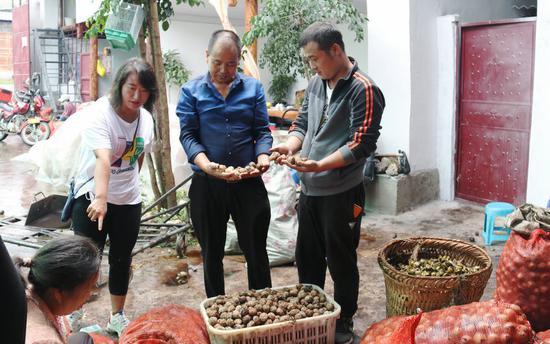 尹海龙(右一)正在给来自贵州的客商刘仁信介绍漾濞核桃 摄影/杨桂清