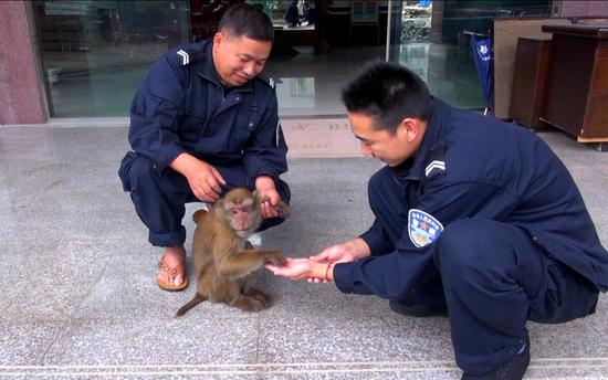 民警照顾野生动物