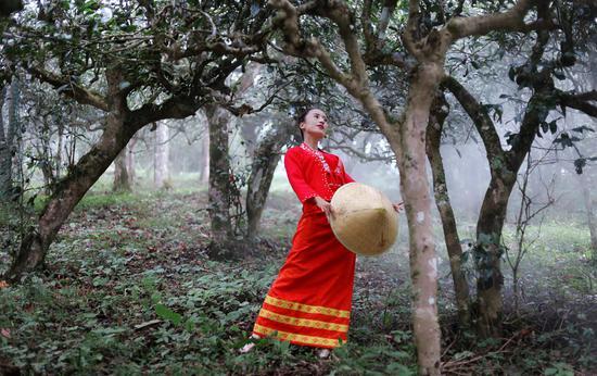 微电影《茶舞》预告片发布 展现一幅自然之美与文化之美融合的