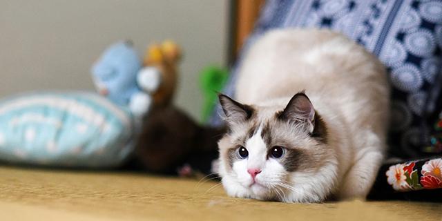 如何拍出圆瞳孔的猫咪