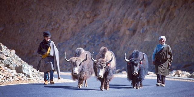 走近西藏佛的阿兰若热振寺
