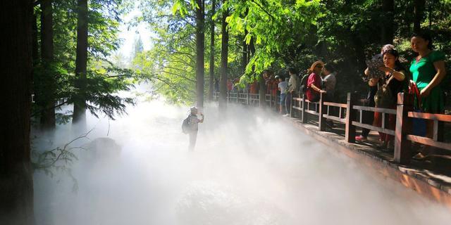 樱桃沟水杉仙境雾里赏景