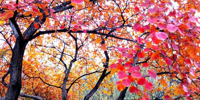 岭绚丽多彩红叶浓