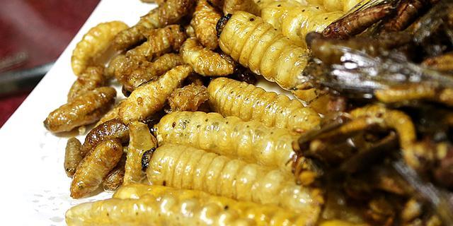 这样的虫子宴你敢吃吗?