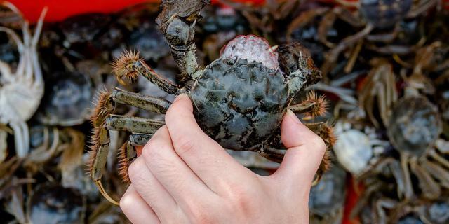 开启疯狂吃蟹模式
