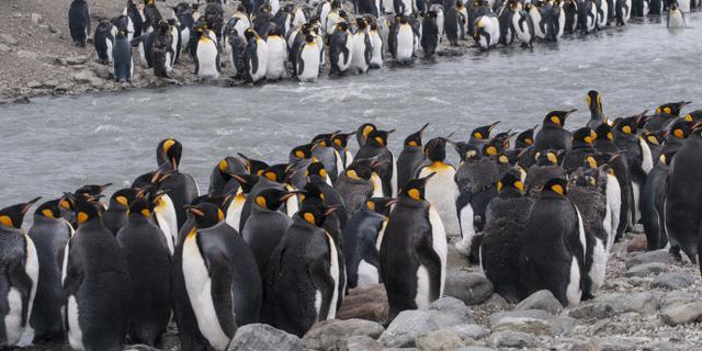 300万只企鹅齐聚