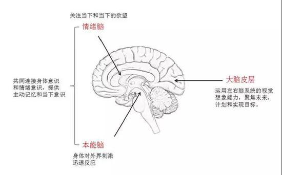 人类的三层大脑