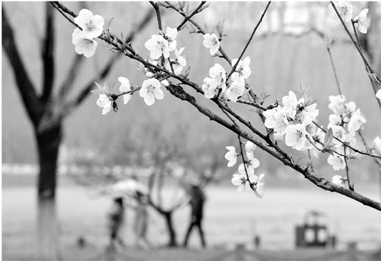 杭州昨狂降13.5℃冷空气杀回马枪 下周雨水助攻更冷