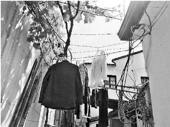 杭1底蕴深厚街巷现尴尬一幕:内衣裤及衣物挂满枝头