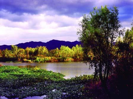 西溪湿地加强整改 水质达到Ⅲ类标准