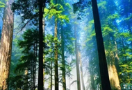 临安有个绝美奇幻森林