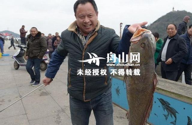 舟山现少见半人长米鱼
