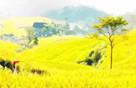 邂逅台州最曼妙的田园风光