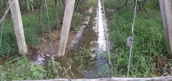 圣大农场积水严重。 朱国民 摄