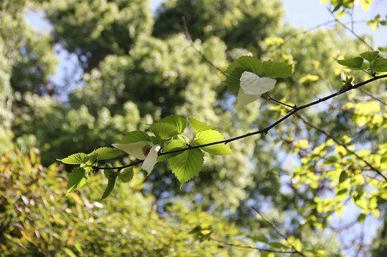 """你要找的春天,也许就在胜日""""杏""""林。"""