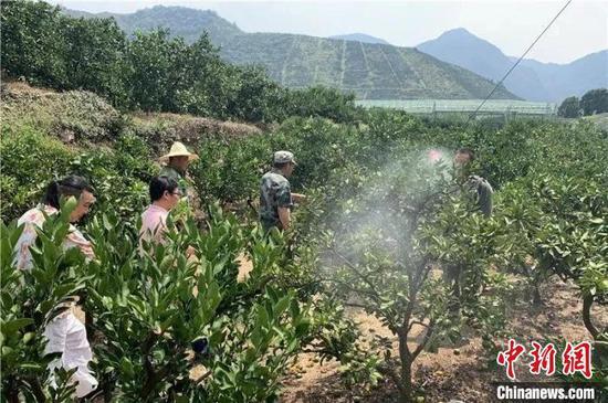 喷洒植物防晒剂 台州发布供图