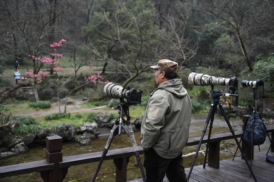 图为:零星开放的樱花吸引摄影爱好者拍照。