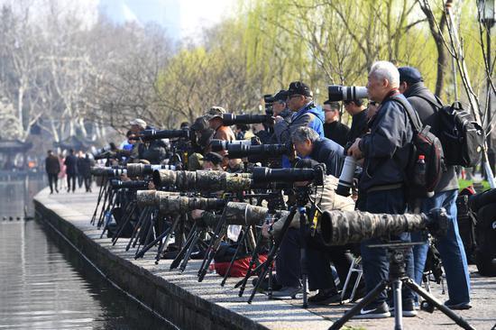 图为:众多摄影爱好者在白堤上拍摄。王刚 摄