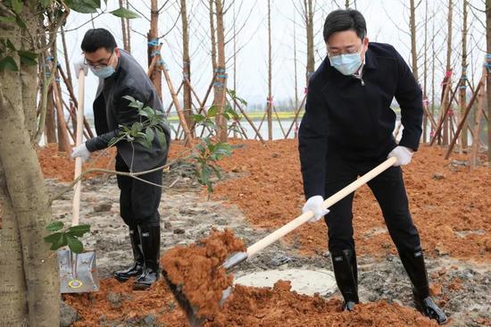 越城区30余位领导参加义务植树活动