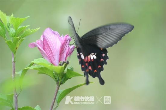 杭州一男子很激动 世界级珍稀物种来我家避雨了
