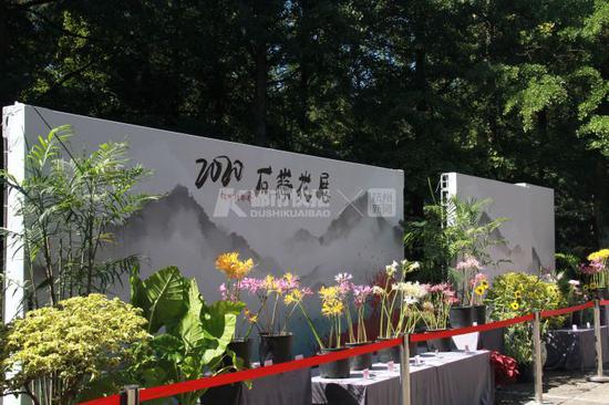 石蒜鹿葱长什么样 一起看杭州植物园专门为它们办展览