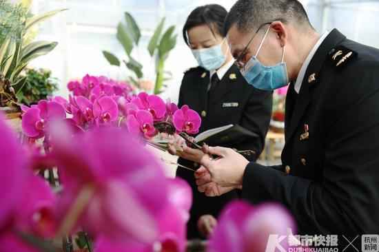 高颜值进口花卉走俏市场 浙海关严格把关做好后续监管