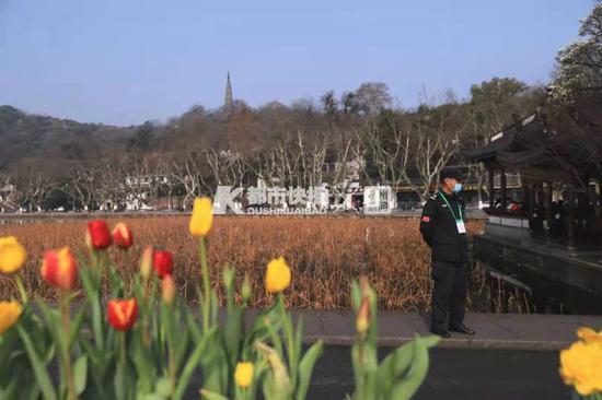 断桥上高颜值隔离带又火了 今年用的是郁金香和洋水仙